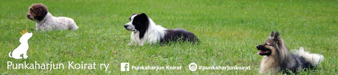 Punkaharjun Koirat ry